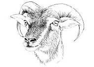 The Soay and Boreray Sheep Society